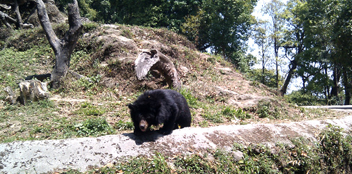 Himalayan Zoological Park Gangtok